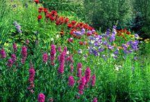 Garden / by Nicolina Malanowski