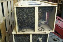 Future farm-bees / by Susan Green Bass