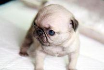 Puppies / by Nikki Basil