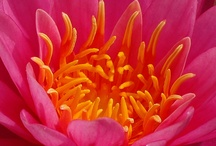 Everything pink and orange :)  / by Morgan Johnson