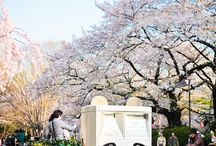 Japan / by Ginie Hu