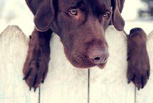 I Love Dogs / by Rochele Soares
