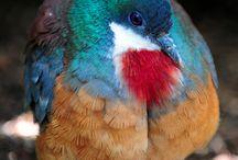 Birds / by Teya Leonard Quarmyne