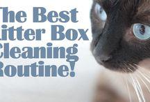 Pet Info / by Roberta Moore
