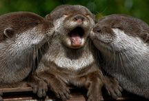 Otters / by Lucy Hosenfeld