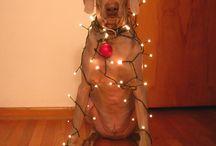 Christmas Ideas / by Kirstin Hyland