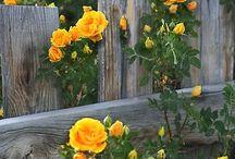 For Our Yard / by Kristin Casanova