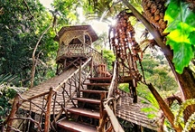 Treehouse dreams / Branch out and stay somewhere tip-top: this adventurous accommodation will truly give you a bird's-eye view… / by Mr & Mrs Smith