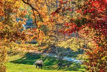 Fall / by Angela Bloom