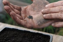 Heritage Seed Library / by Garden Organic