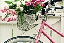 Bike cute Bike / by Debbie Simko