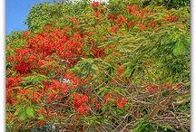 Key West / by Rochelle King Coghill