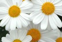 Flower garden / Flowers I want in my yard / by Donna Piranha