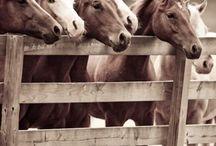 Horses / by Judy