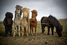 Minis and ponies / by Kathryn Genske Breese