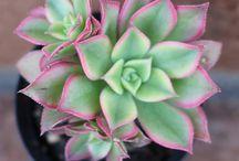 Cactus y Plantas / by patryeivissa