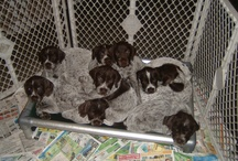 Kuranda Puppies / Even at such a young age, these dogs know a good thing when they see it!  / by Kuranda Dog Beds