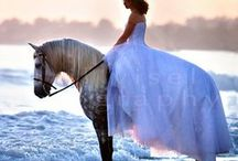 Four Legged Beauties / Horses, horses, horses!!!❤️ / by Barbe