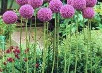 In My Garden / by Sharon Wesolowski
