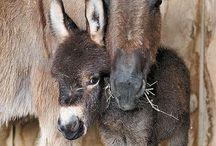 I love donkeys / by Vicky Van Houten