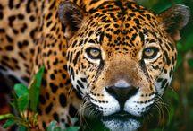 Love Leopard / by Melissa Zapata Butler