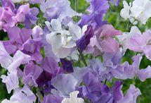 flowers / by Sheila Alkire
