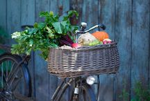 Bicycles / by Kathy Dietkus