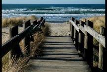 boardwalk / by Mary Riedel