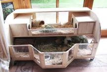 guinea pig ideas / by Carrie Trautman-Henderson
