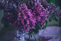 Secret Purple Inpiration / Purple is our inspiration in anything.. / by Lida's Secrets