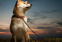 Photography - Pets / A compilation of wonderful pet photography. / by Kerrie Tatarka