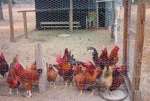 Farm Life / by Bonnie Walker