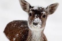 Let It Snow. / by Cheryl Watson