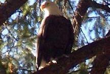 Birding in Plumas County / by Plumas County Tourism Council