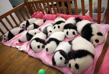 Cute Animals / by Rhoda Hernando
