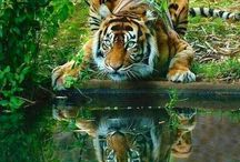 Beautiful animals / by Silvia Valldeperas