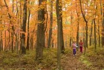 Fall Fun / by Visit Cumberland Valley PA