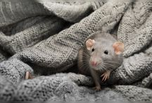Rattery / by Claudia