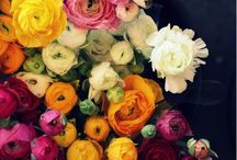 Flowers / by Stacey Brewster