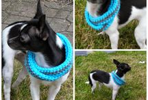 Crochet For Pets / by Charmed By Ewe