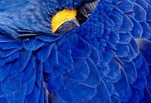 Parrots / by Linda Elliott