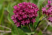 Ohio Native Plants / by Terri Wellman