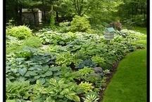 Gardening / Inspiration for my dream garden / by Melissa Dunworth