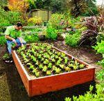 gardening / by Catherine Bee W