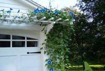 garden ideas / by Tiffany n Randy Moore