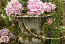 Elegant garden / by Melanie Peets