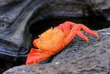 Crab / by Галинка Калашник
