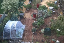 Gardening for Small Spaces / by Oregon State University Extension Service