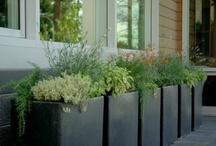 Gardens: Containers  / by Andee Barbour