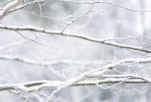 Winter / by Neta Herron